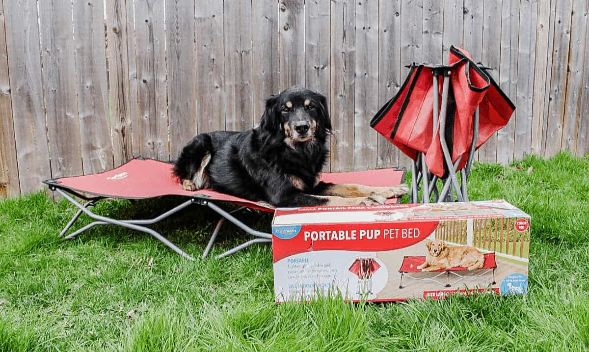 black and brown dog laying on a red folding dog bed, a second bed folded up beside him and a box in front of him that says portable pup pet bed