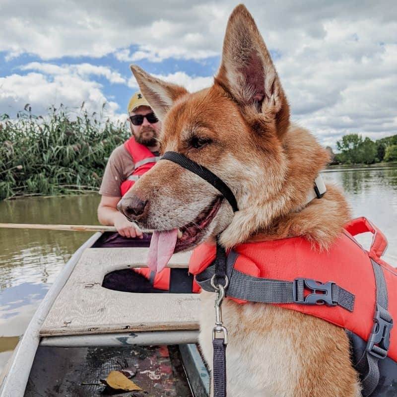 german shepherd dog sitting in a canoe on the water, wearing an orange life jacket, with a man in the canoe behind it wearing a life jacket and holding a paddle