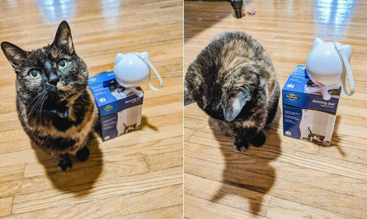 collage of tortoiseshell cat sitting next to a laser pointer toy, looking at the laser on the ground