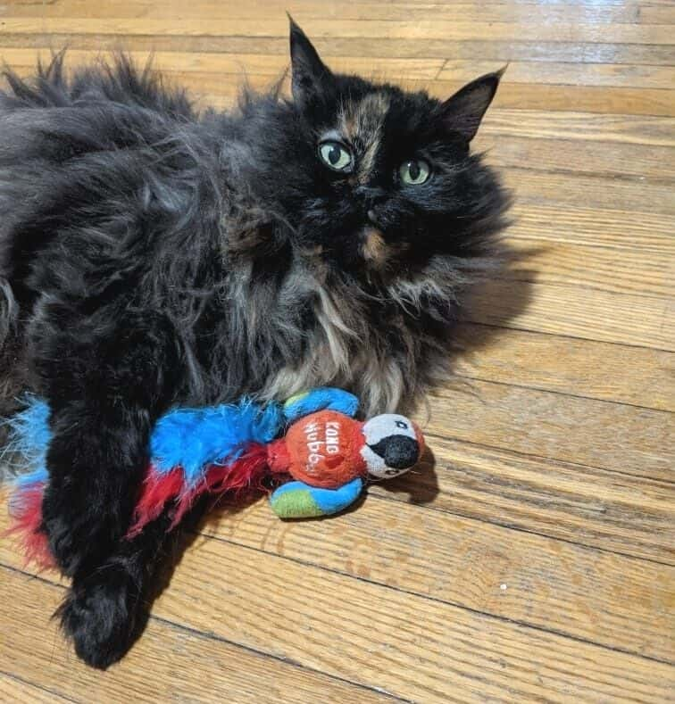 long-haired tortoiseshell cat laying on a wooden floor playing with a cat toy that looks like a parrot with the words KONG wubba on it