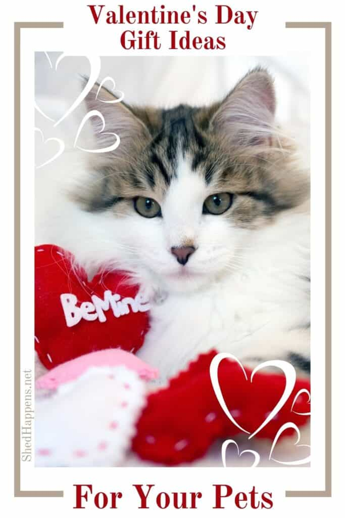 small white and grey tabby cat with long hair laying on a white photo studio backdrop with a pile of red, pink and white foam hearts with the text Valentine's Day gift ideas for pets