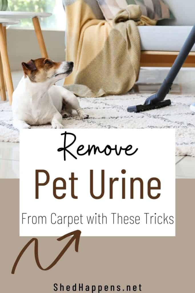 A small white dog with a brown and black face is laying on a white and grey rug while a woman wearing jeans is vacuuming the rug beside it. Text announces remove pet odor from carpet with these tips.