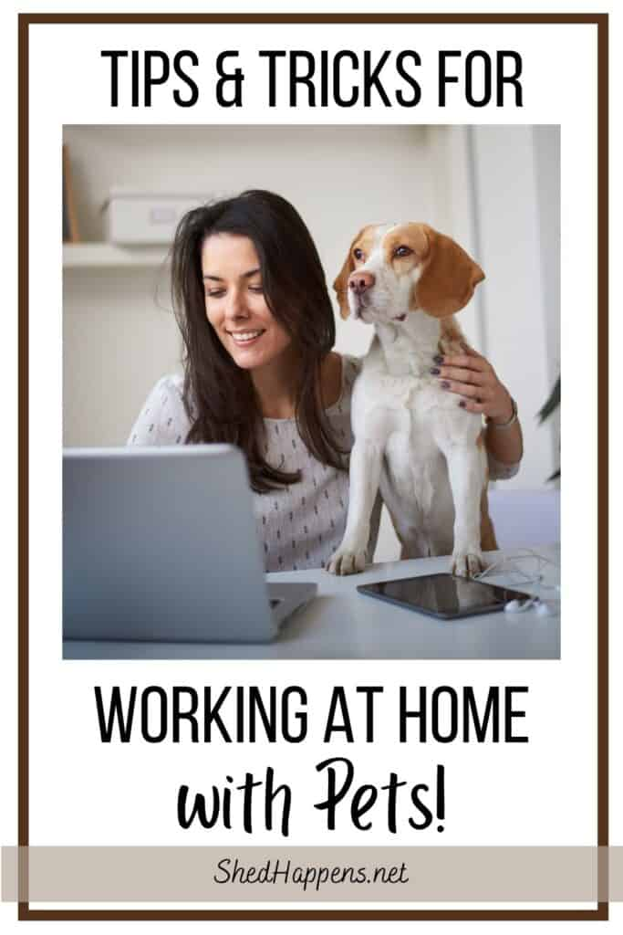 A woman and a brown and white dog sitting at a desk in front of an open laptop. Text states: Tips & tricks for working at home with pets